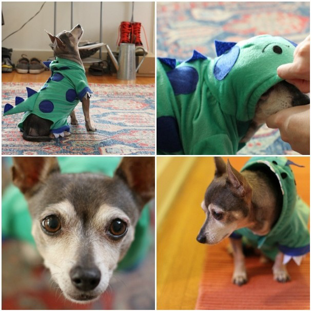 Pets archives really awesome costumes diy dog dinosaur costume solutioingenieria Choice Image