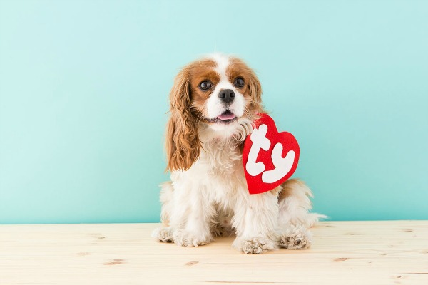 Beanie Baby Dog Cotsume