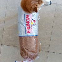 Bread bag dog costume